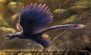 Microraptor Gui Restored