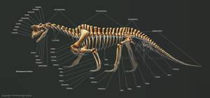 Shringasaurus Indicus Skeleton Study