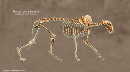Machairodus Aphanistus Skeleton Study (No Labels) by TheDragonofDoom