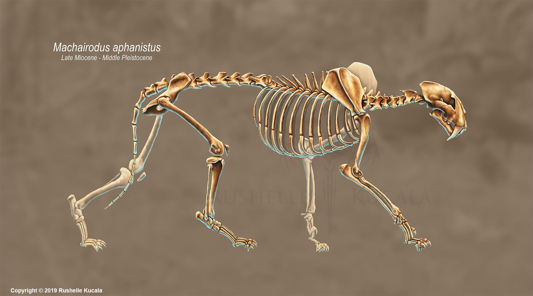 Machairodus Aphanistus Skeleton Study (No Labels)