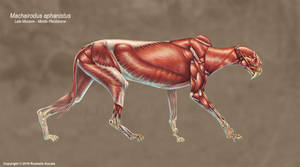 Machairodus Aphanistus Muscle Study (No Labels)
