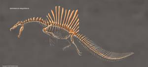 Spinosaurus Aegyptiacus Skeleton Study (No Labels)