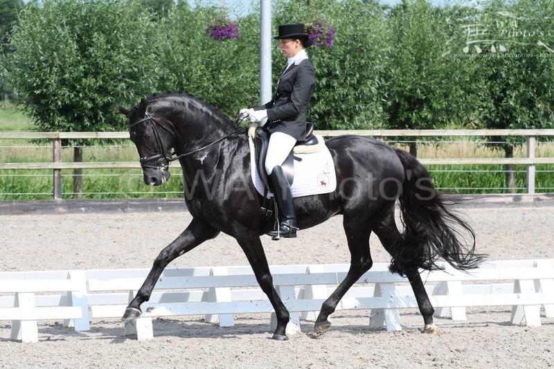 Black Horse by Wieneke