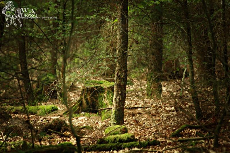 Forest by Wieneke