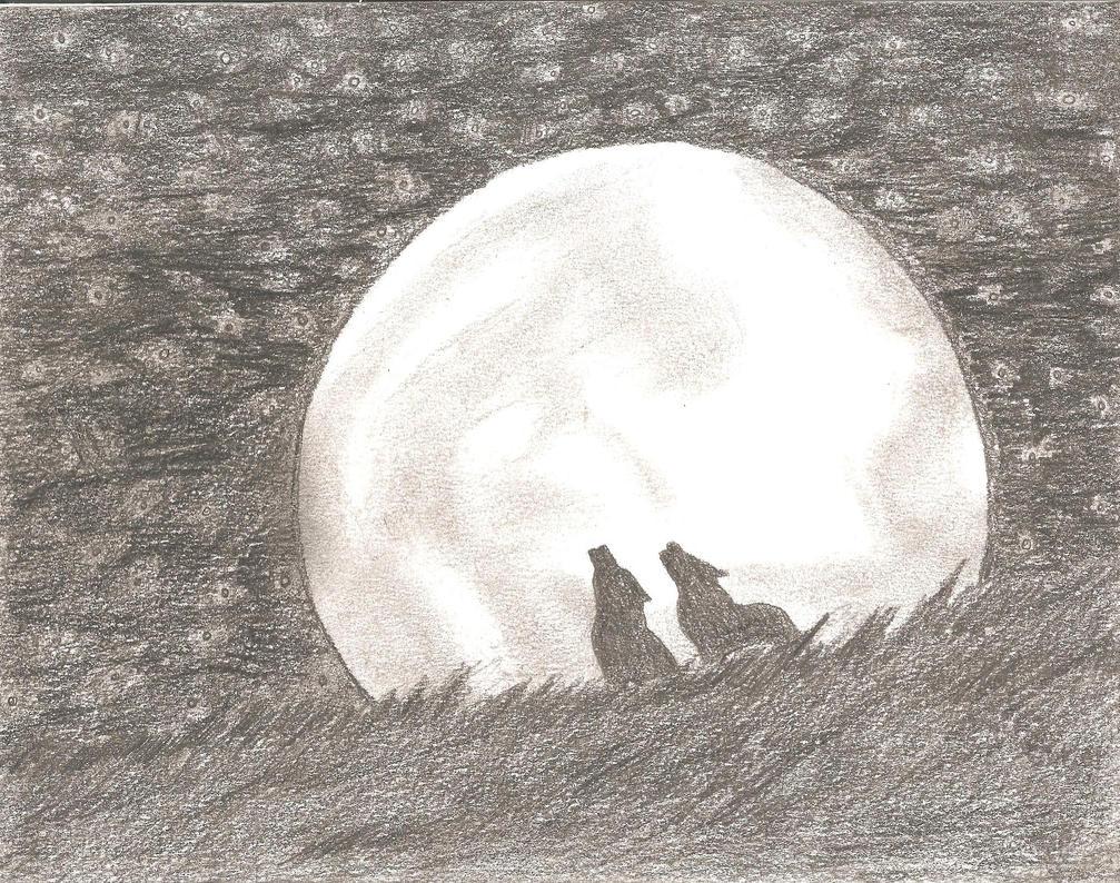 Starlit night by Thy60