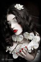 Orchid by la-esmeralda