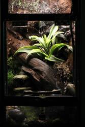 Thumbnail dart frog enclosure