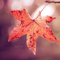 Fall III by Alyphoto