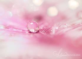Softness by Alyphoto