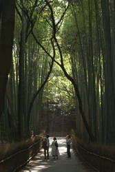 The Bamboo Grove by Aeris-13