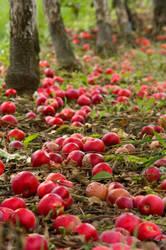 Fallen Fruit by Aeris-13