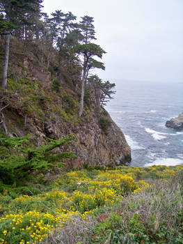 Carmel California trail 6