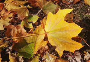 Golden leaftover...