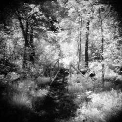 In the swamp_01 by JDV-from-A