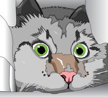 Cat McCatface