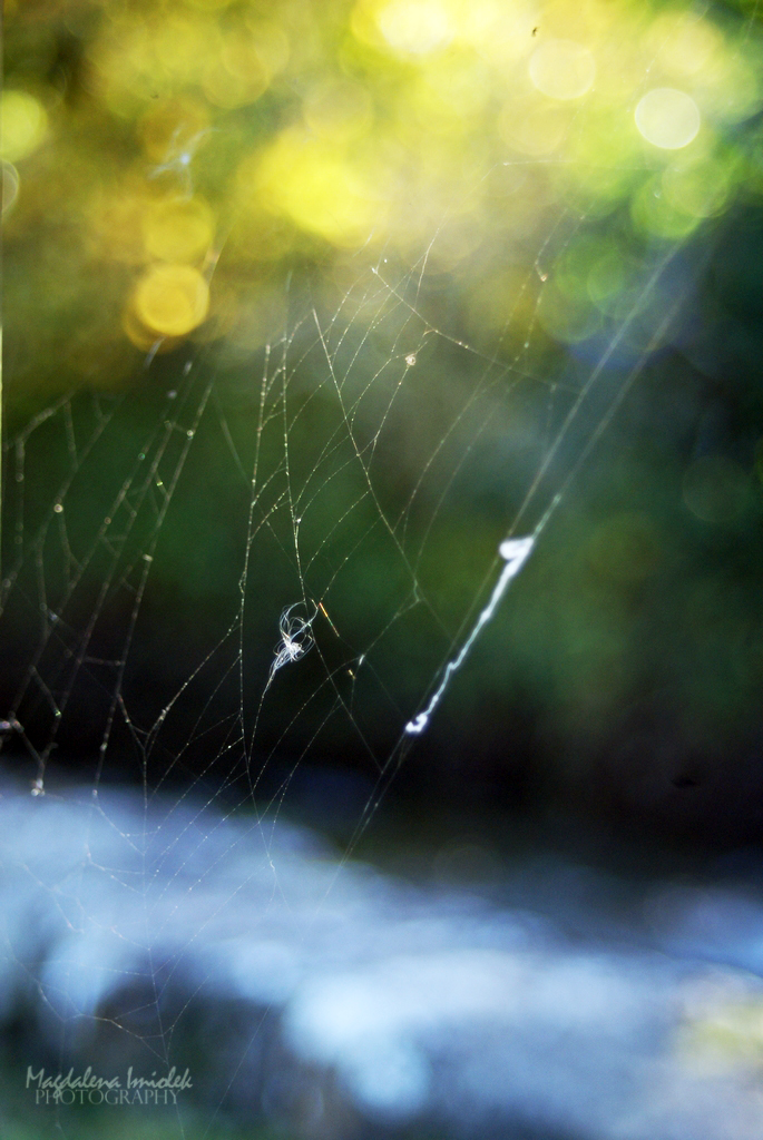 the web of light by FairyOfLuck