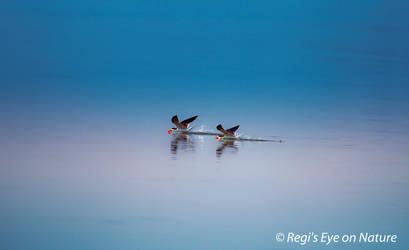 Skimming the water