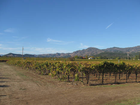A Day at the Vineyard