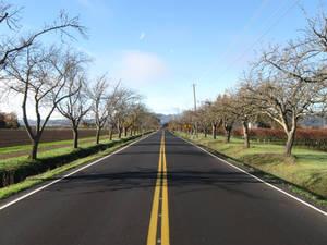 Oak Knoll Road