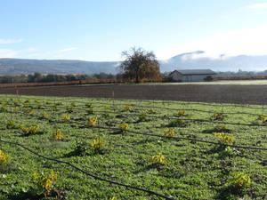 Montecello Farmland