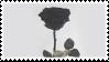 black rose by egraut