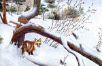 Fox In The Snow Commission