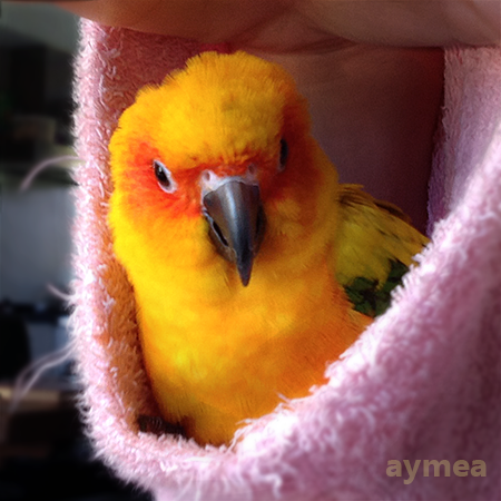 Chicken up a sleeve by Aymea