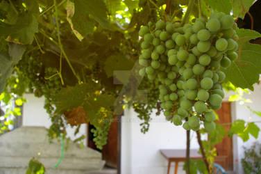 Before wine