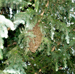 A swarm of wild bees by vertiser