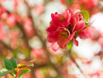 Pink Summer by vertiser