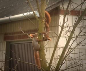 Squirrels by vertiser