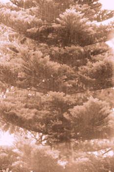 Tree in the rain
