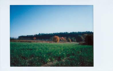 Autumn Tree by vertiser