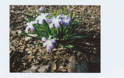 Spring flowers by vertiser