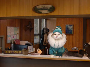 Lucy Cat of Twin Peaks