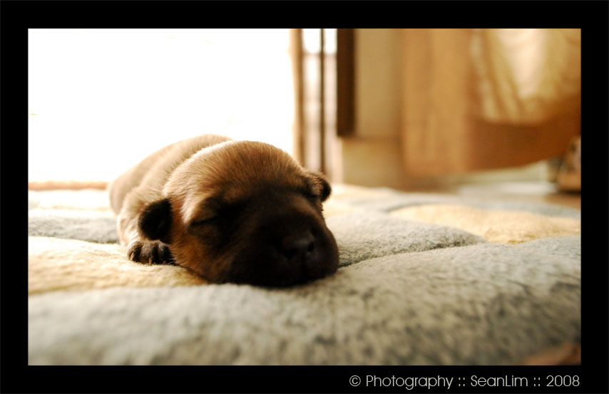 My puppy by sean89