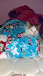 Warm Kitty by Jazzy-Jasmine