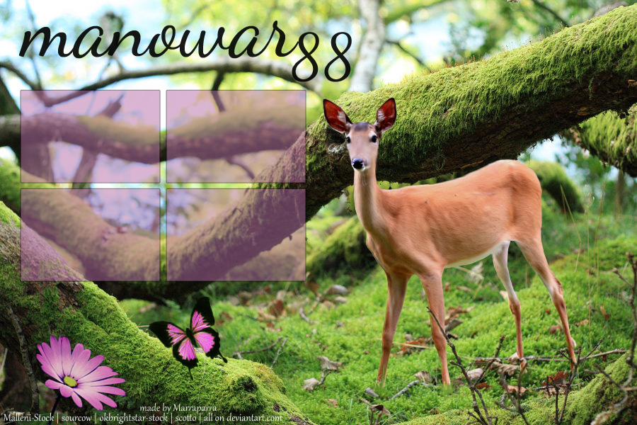 Deer layout by Marraparra