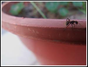 La hormiga no atomica.