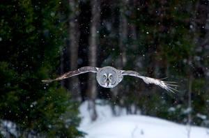 Snow flight by Mateuszkowalski