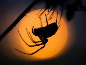 Sunset spider by orestART