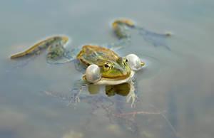 Frog by orestART