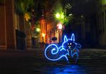 Cat in Freiburg