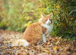 Mister autumn cat by orestART