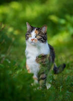 Beautiful Kitty by orestART