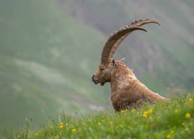 The Ibex King by orestART