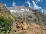 Hungry marmot mom and baby by orestART