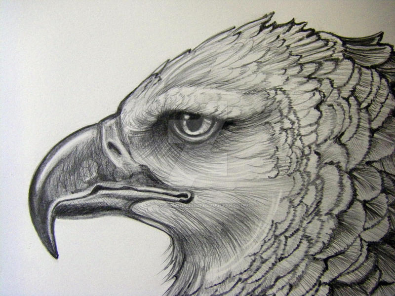Eagle sketch drawing
