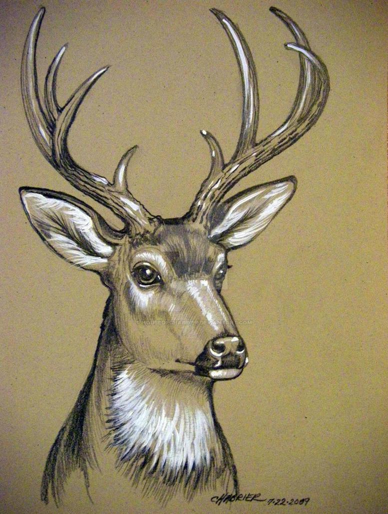 Mule Deer Sketch By HouseofChabrier On DeviantArt