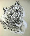 Snow Leopard Not Happy